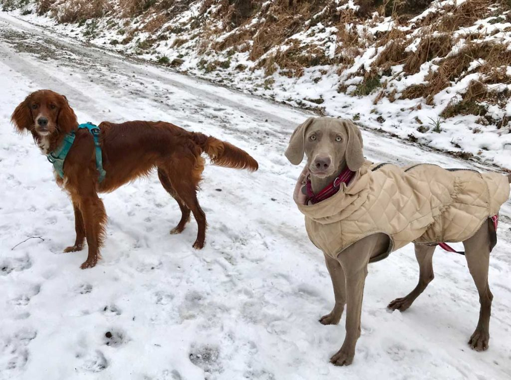 Burwash Dog Walking (Park-Woods)