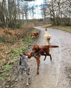 Park Woods Burwash Dog Walking